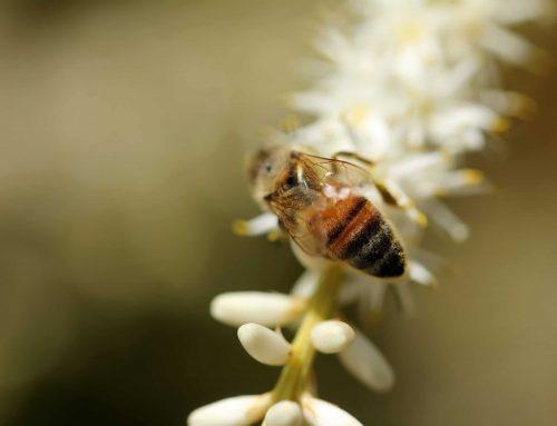 Nous dépendons tous de la survie des abeilles!